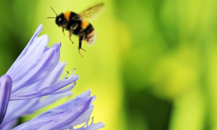 Scientists and Bumble Bee Watchers