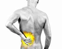 Herbs for Back Pain?