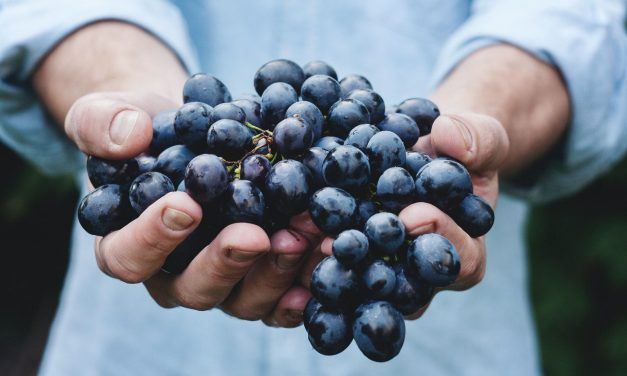 Grape Extract Protects from Colon Cancer